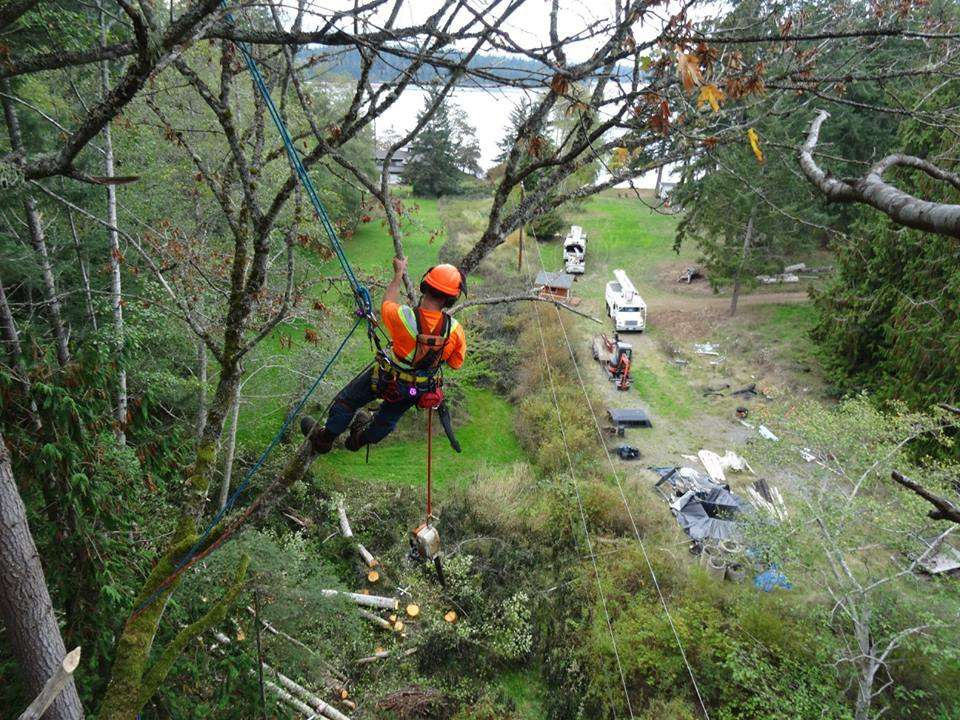 Removing Branches Overhanging Power Line From Skyline For Tree Services in Comox Valley