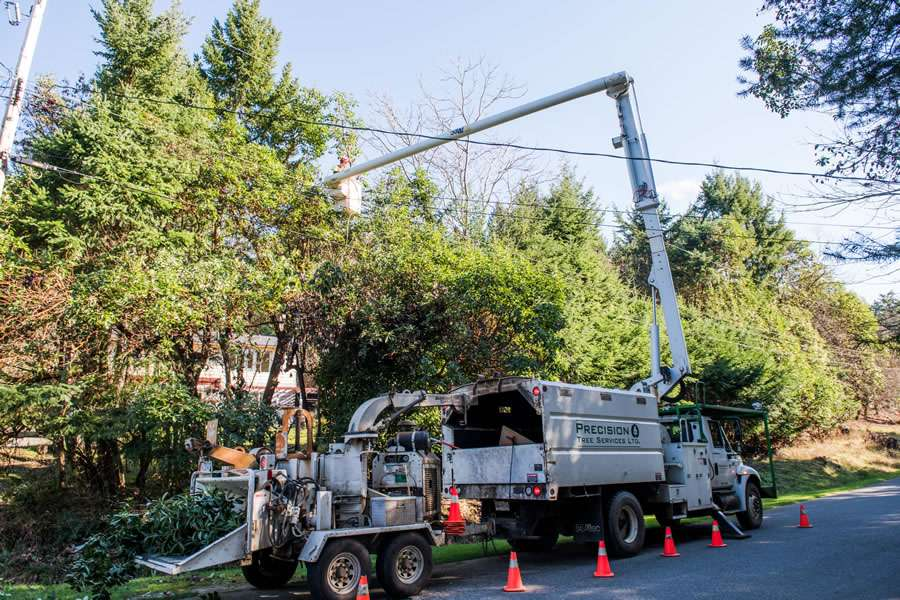 Tree pruning just one of the tree services we offer.