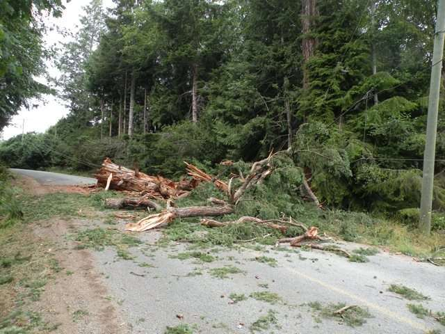 Clearing storm damage, just one of the tree services we offer.
