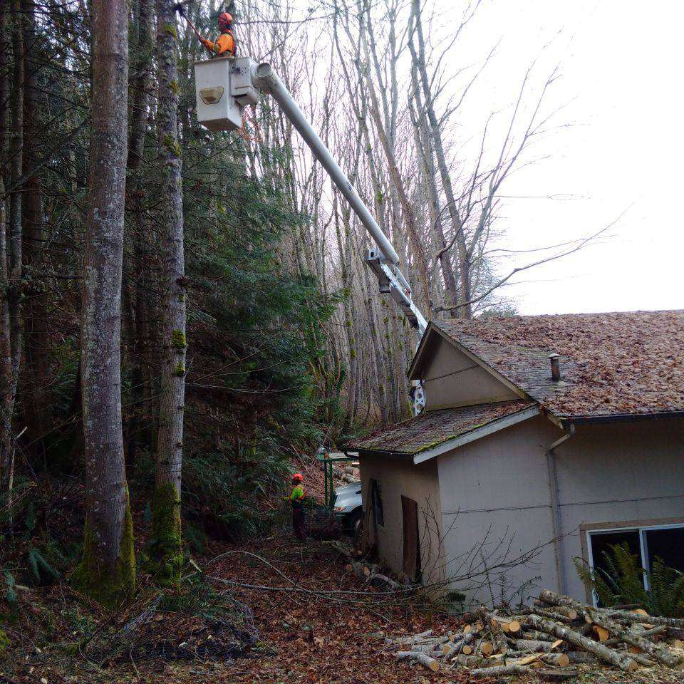 Tree Pruning Services with a far reaching bucket truck