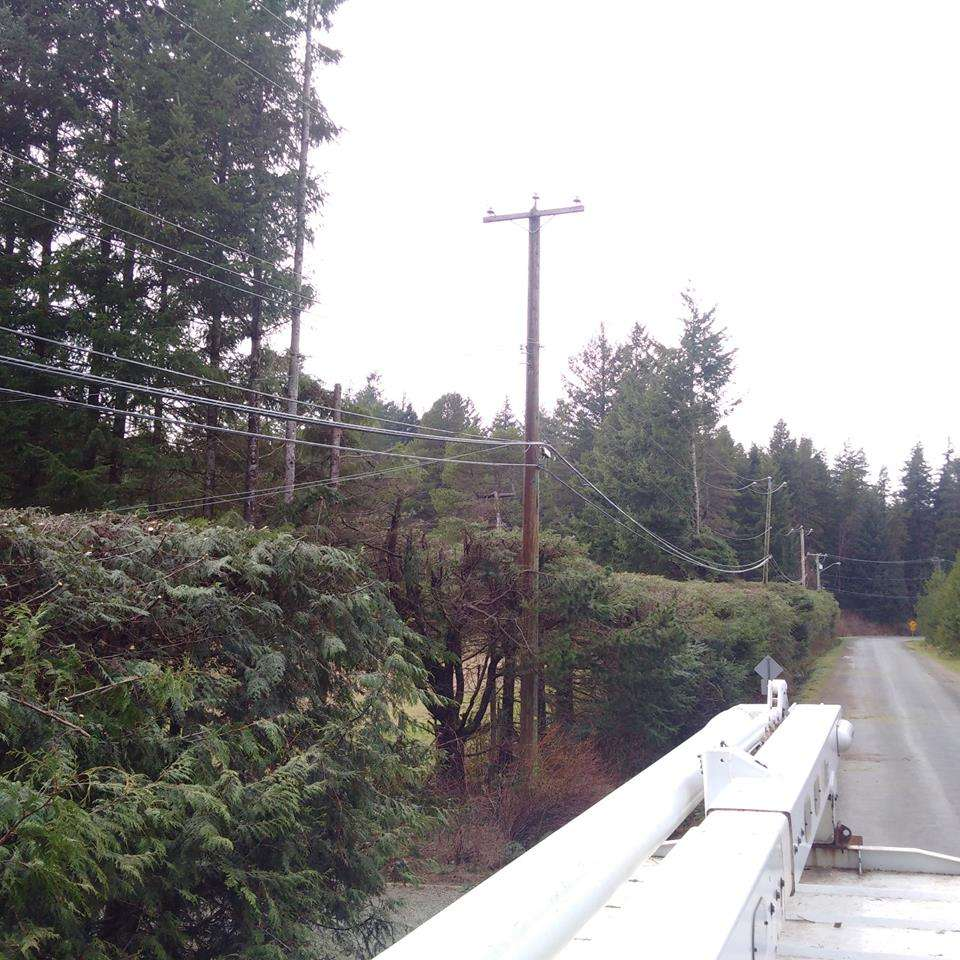 Tree Pruning Services: Power line clearing - After