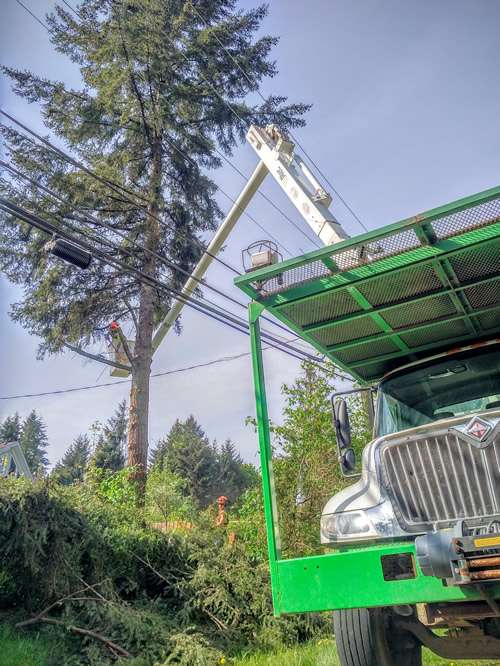 Tree pruning definition of excellence completed by Precision Tree Services.