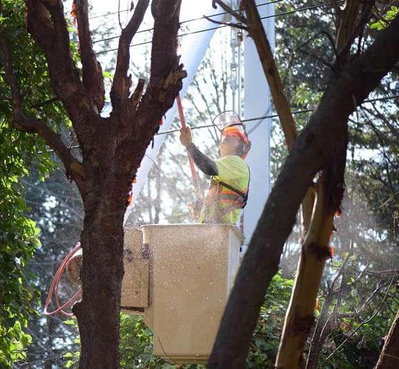 Trained Tree Surgeon