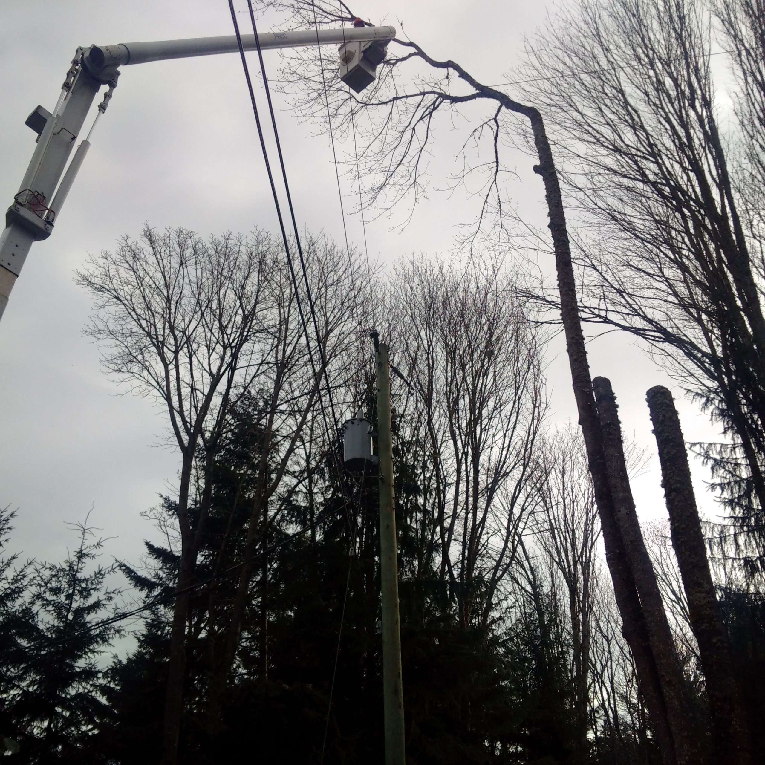All inclusive tree services. Utility hazard tree removal.