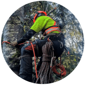 Don't want to climb? Call Precision Tree Services in the Comox Valley