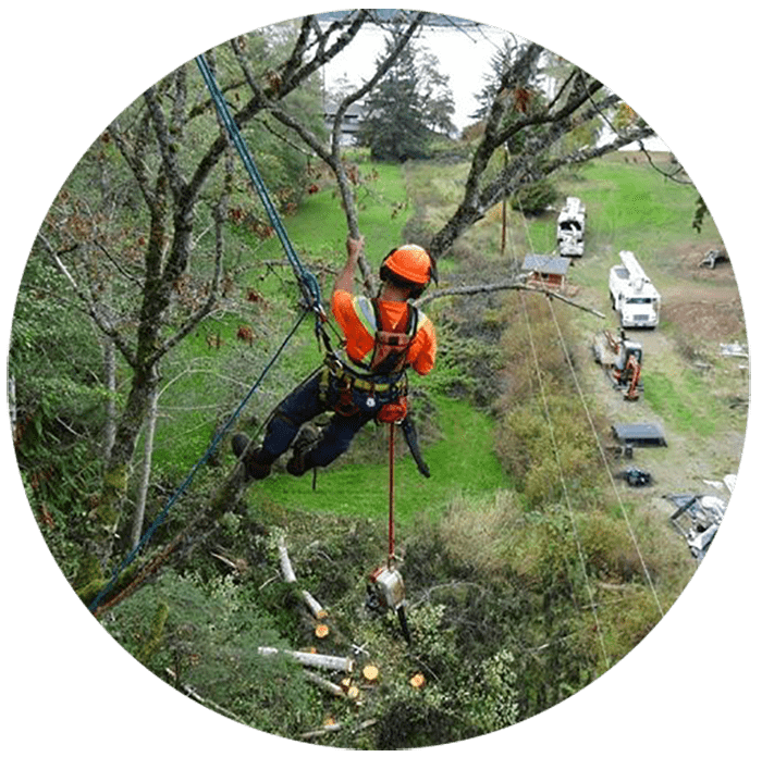 Out on a limb? Call Precision Tree Services in the Comox Valley