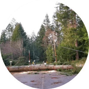 Unruly tree? Call Precision Tree Services in the Comox Valley